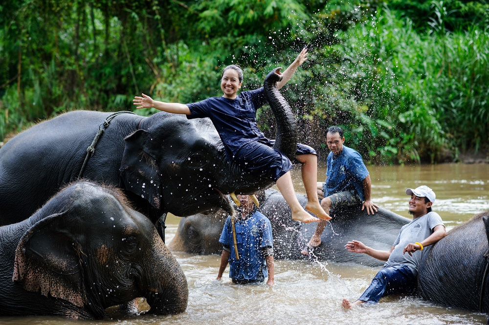 thailand elephant volunteer 1